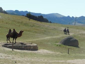 cammelli mongoli